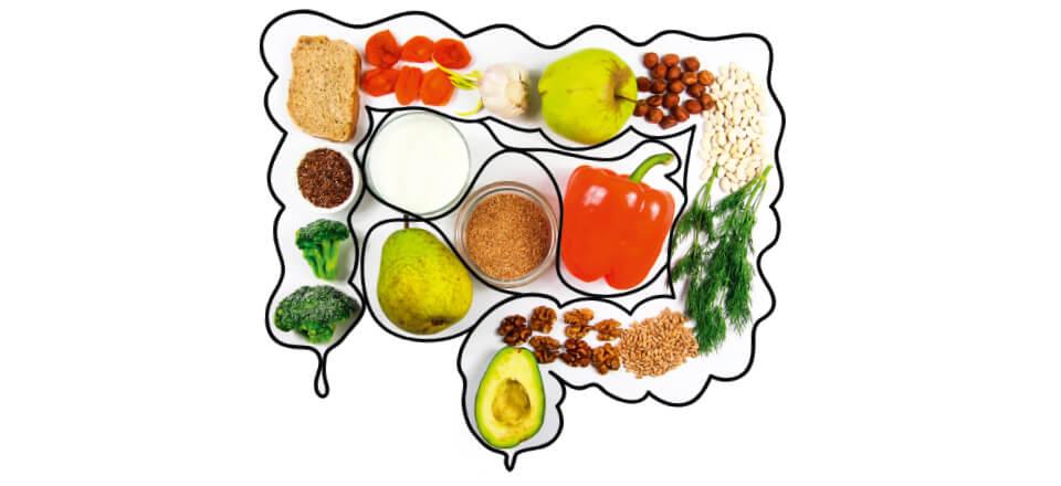 Tarmen og din tarmflora har stor indflydelse på din sund og velvære